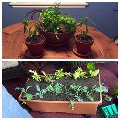 2015 herb/veggie pots