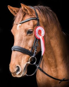 The gorgeous Theo modelling one of @dressage_anywheres snazzy red rosettes at our collaborative commercial shoot with @the_bit_uk last week. What a hunk!