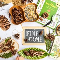 """Lacy Arrowsmith on Instagram: """"Happy Monday friends! Over the past week, we completed a simple pinecone study inspired by the Tree Unit from @thepeacefulpress and…"""""""
