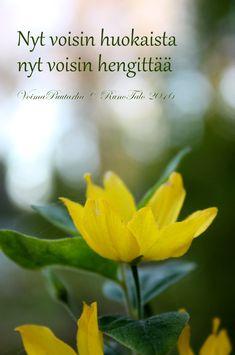 I H M I S E N S Y D Ä M E S S Ä      voimaruno & voimakortit   viikko 47 - 2016            Höyhenen kevein askelin   saapui pieni...