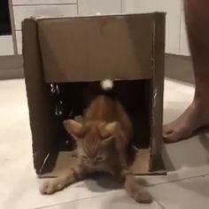 Funny Animal Memes, Funny Animal Videos, Cute Funny Animals, Funny Animal Pictures, Cute Baby Animals, Animals And Pets, Cute Cats, Funny Cats, I Love Cats