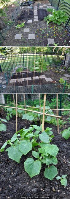 Kitchen garden - Seeds Sprouting