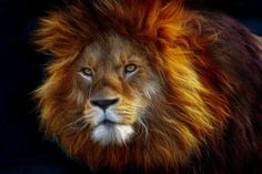 It takes courage to become all you can be. What Is Courage, Cool Captions, Lion Art, All You Can, Pet Clothes, Akita, Wildlife Photography, Big Cats, Beautiful Creatures