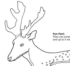 Colouring page of Fallow Deer Mammal by JohnsIllustrations on Etsy, $1.38