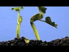 Tohumun Büyümesi