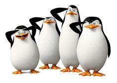02 Pingouins-de-Madagascar