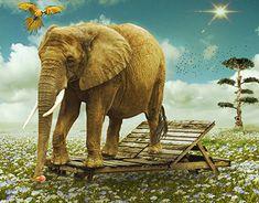 Architecture Photo, Wood Print, New Work, Digital Art, Elephant, Photoshop, Gallery, Animals, Ice Cream