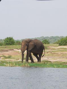 Day 9- Queen Elizabeth National Park, Uganda Cape Town, Queen Elizabeth, Uganda, National Parks, Wildlife, Elephant, Africa, Animals, Animales