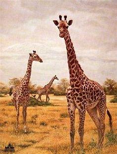 """Masai Giraffes"" by Charles Frace"