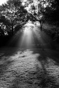 Sunday morning shadows in Frontenac, Missouri.