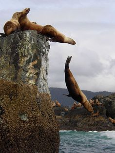 Sea Lions by Kevin7, via Flickr