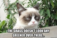 "Wise Grumpy Cat says ""The grass doesn't look any greener over there"""