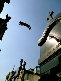 Cat jumping over crypts, La Recoleta Cemetery, Buenos Aires, Argentina