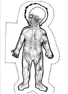 Digestive System Unlabeled Digestive System Diagram