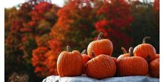 Egg Harbor's Pumpkin Patch Festival | Travel Wisconsin