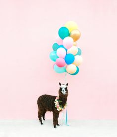 An alpaca, wearing a floral wreath, standing in front of a pink wall, holding a bundle of balloons. Dreams come true. Shot for… Llama Birthday, Happy Birthday, Creative Decor, Creative Design, Alpaca My Bags, Gold Chargers, Print Your Photos, Let Your Hair Down, Pink Walls