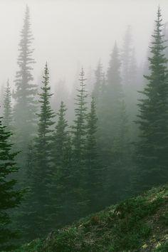 Woods & Faulk journal