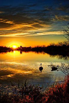 Canadian geese sunset ~ Arizona
