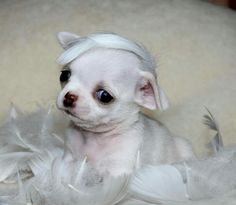 Resting in a cloud of feathers...