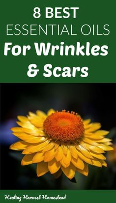 The 8 Best Essential Oils for Wrinkles and Scars PLUS a Natural Night Serum Anti-Aging Recipe — Home Healing Harvest Homestead Essential Oils For Skin, Essential Oil Blends, Natural Skin Care, Natural Health, Diy Skin Care, Natural Living, Natural Remedies, Herbalism, Healing