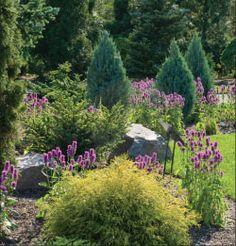info on dwarf conifers