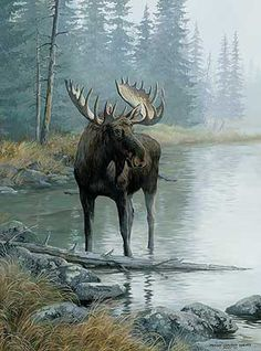 Quiet Water - Moose by Persis Clayton Weirs