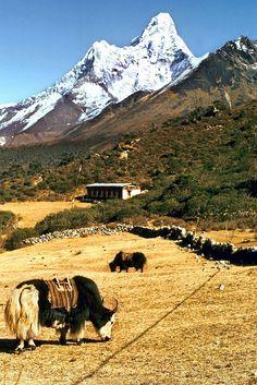 Fresh December Snows - Tibet ... www.ticketalltime.com