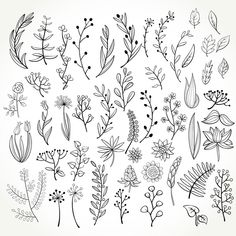 Botanical Line Drawing, Floral Drawing, Flower Design Drawing, Simple Flower Drawing, Flower Pattern Drawing, Bullet Journal Ideas Pages, Bullet Journal Inspiration, Doodle Drawings, Doodle Art
