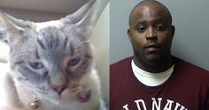 Harsh penalty for Michigan man that mistreated kitten for 9 months! Please act now! | Randy DeJarnette, based in Saginaw, Michigan, mistreated a kitten named Gabriella for over 9 months. During this period the cat managed to survive multiple injuries, including several broken bones. The cat had to live not knowing if she would survive the next day. Click for details and please SIGN and share petition. Thanks.