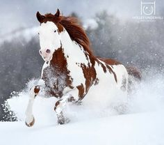 Horses In Snow, Horses And Dogs, Wild Horses, Animals And Pets, Cute Animals, Pretty Horses, Horse Love, Beautiful Horses, Animals Beautiful