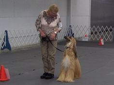 "This shot, Jil Jones said, comes from Zoie's rally class where she earned her ""second leg"" toward her obedience title, needing three legs in all to finish, a rarity for the Afghan hound breed, according to Jones."