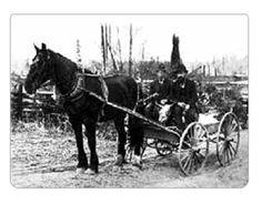 1910 Harvest on the Robert J. Wark farm, Langley Prairie