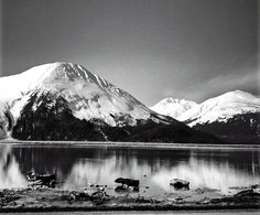 Black and white majesty. Provided by © Mabel Marinkovski. (my sister's so talented!)