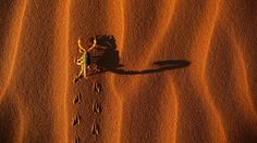 Namibia national park landscapes scorpions shadows (1920x1080, national, park, landscapes, scorpions, shadows)  via www.allwallpaper.in