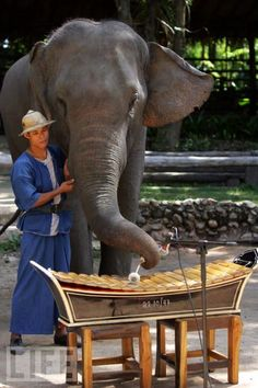 Thai Elephant Orchestra: Started in 2001, this orchestra features up to 14 elephants playing string and percussion instruments. Their CDs go to support elephant conservation.