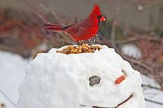 "Original description: ""Create a snowman bird feeder."" My description: Dribble some red food dye around the bird seed and give the snowman a grisly expression, and you've got yourself a winter scene to warm any Zombie fan's heart!"