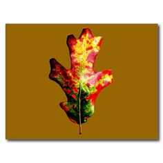 Colorful Autumn Oak Leaf Postcard