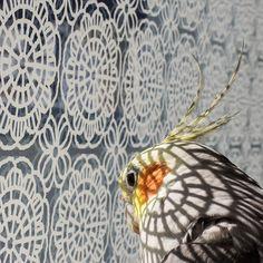 Beautiful cockatiel portrait! The chiaroscuro is exquisite.