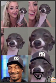 Snoop Doggs twin brother is a real dog dawg! This is a funny picture about Snoop Dogg and how he has a lookalike who is Jenna Marbles dog! Snoop Dogg, Funny Animal Pictures, Funny Photos, Funny Animals, Hilarious Pictures, Funny Cute, The Funny, Funny Dogs, Funny Memes