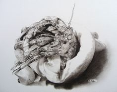 Hermit crab charcoal drawing  Original charcoal drawing of a hermit crab on watercolour paper by Karen Ruffles