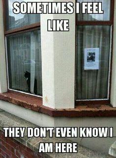Lol poor kitty