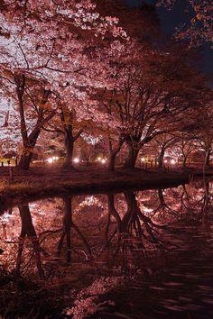 lifeisverybeautiful:  via 500px / Sakura Reflection by Azul Obscura
