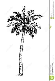 Illustration about Hand drawn vector illustration of coconut palm tree. Isolated on white background. Illustration of retro, woodcut, summer - 94527101 Palm Tree Sketch, Palm Tree Drawing, Tree Sketches, Tattoo Sketches, Coconut Tree Drawing, Palm Tree Tattoo Ankle, Coconut Palm Tree, Tree Illustration, Black And White Drawing