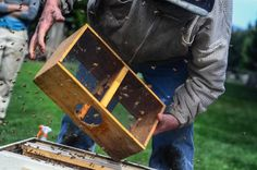 Beekeeping 101: Hiving The Bees and Homemade Sugar Syrup | The Elliott Homestead (.com)