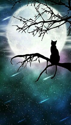 Scenery Wallpaper, Cat Wallpaper, Galaxy Wallpaper, Animal Paintings, Animal Drawings, Black Cat Art, Beautiful Moon, Silhouette Art, Anime Scenery
