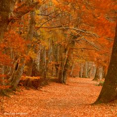 Lady Mary's Walk, Crieff, Perthshire. Photo from Visit Scotland.