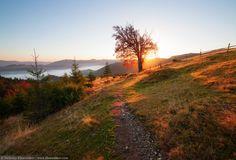Fall colors tree by Nickolay Khoroshkov on 500px