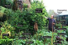amazing 1/4 acre piece of food paradise in Whakatane.