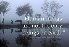 ethics 101: human beings are not the only beings on earth and they should have rights