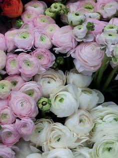 신부가 들고 있으면 예쁜 꽃